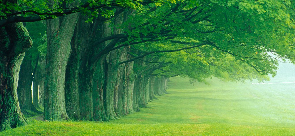 treesslider
